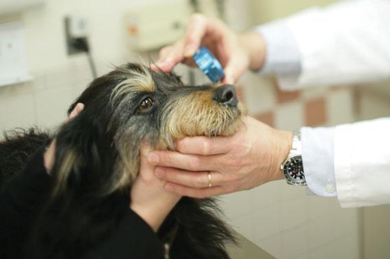 Обработка глаз стрижка собак Киев