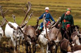 Reindeer herding in Mongolia