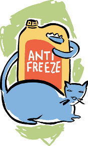 cat and antifreeze